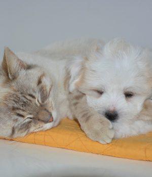 Kleinburg Veterinary Hospital Wellness Plans
