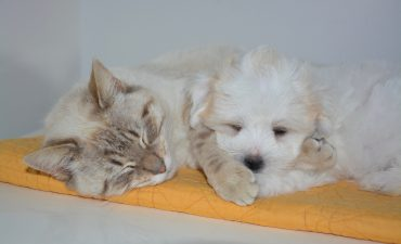Kleinburg Veterinary Hospital Wellness Plans