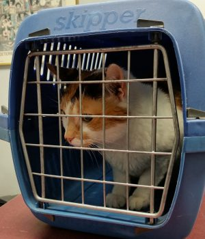 Cats to the Vet