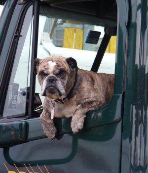pets and summer safety